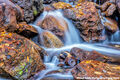 Leaf Litter Waterfall