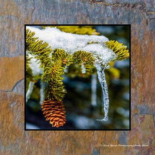 Pine Cone & Icicle
