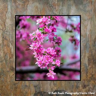 Pretty in Pink on Slate