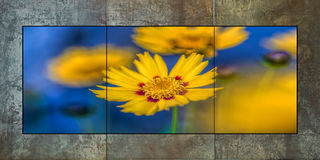 Yellow & Blue Triptych