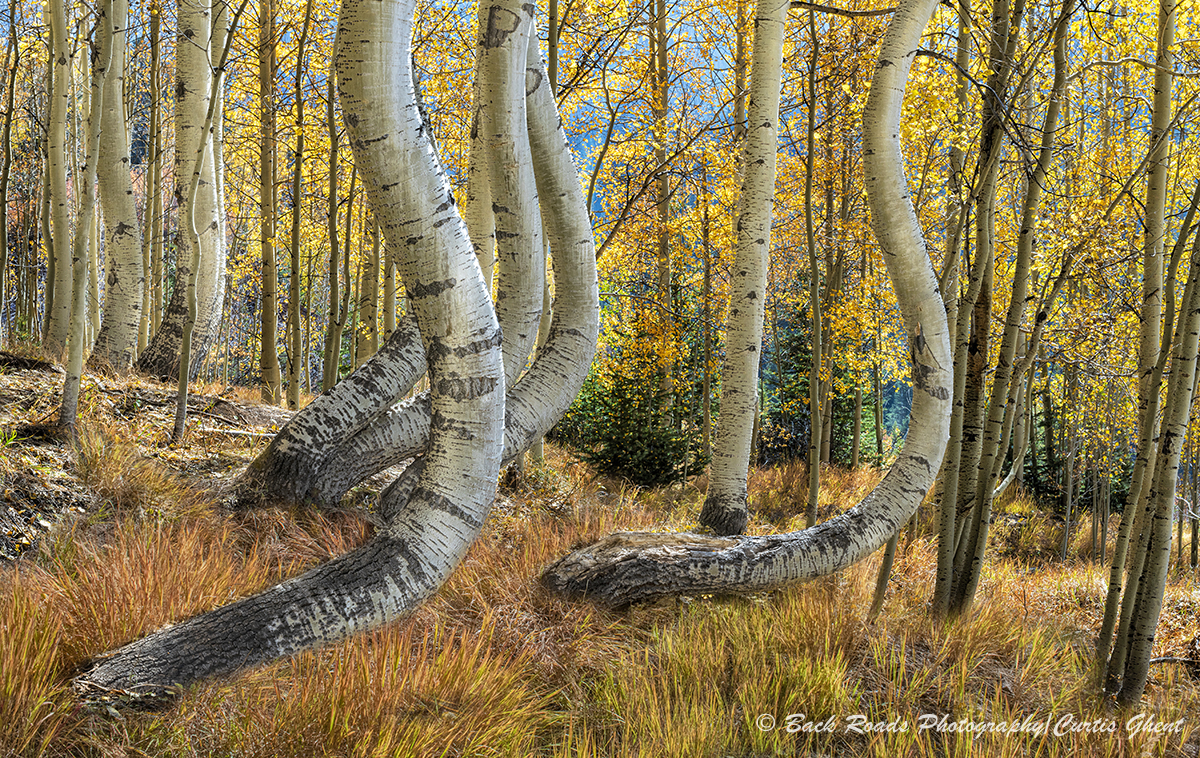 Aspens, Ophir, , photo