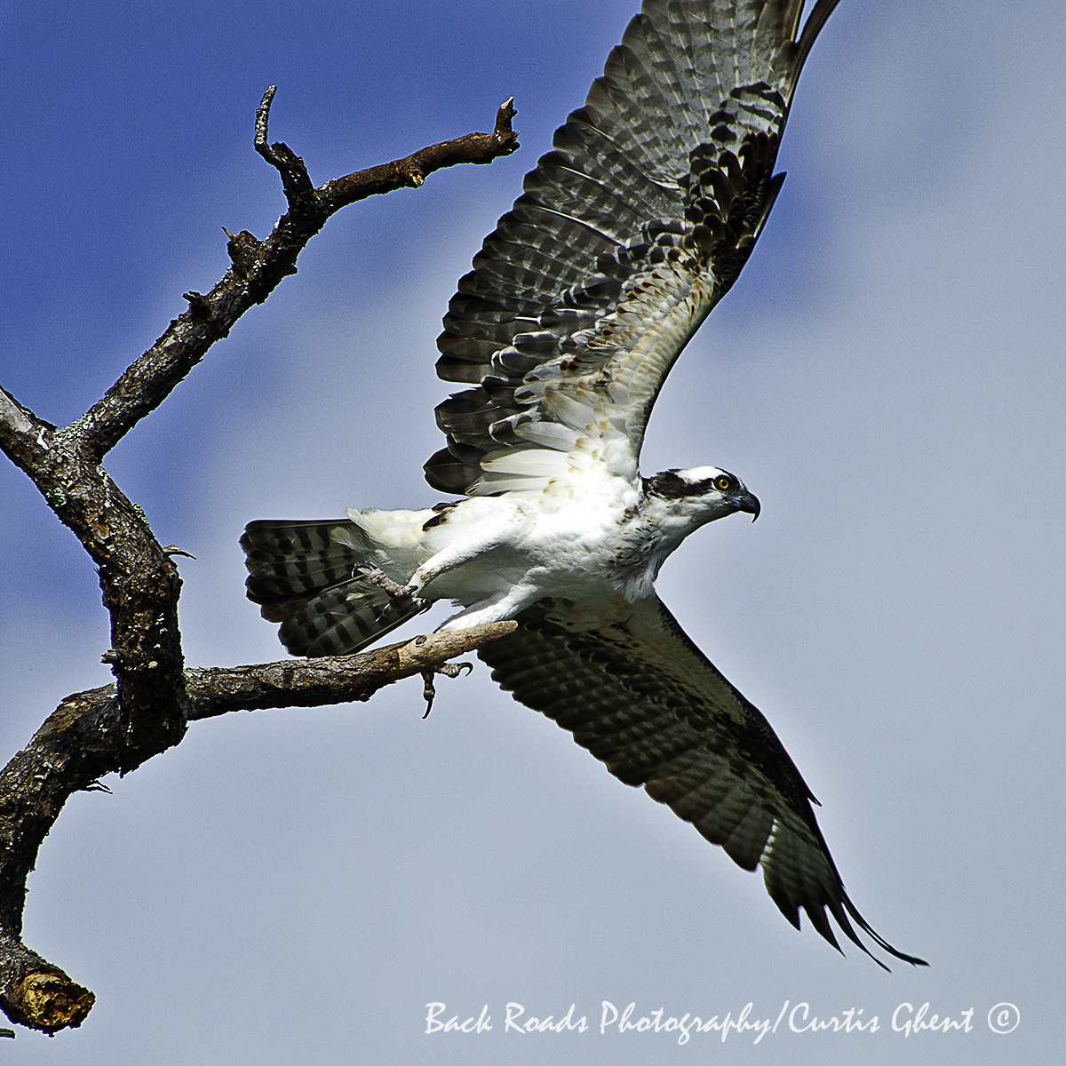 Sometimes you get lucky. While boating in Florida I captured this Osprey just as it launched into flight.