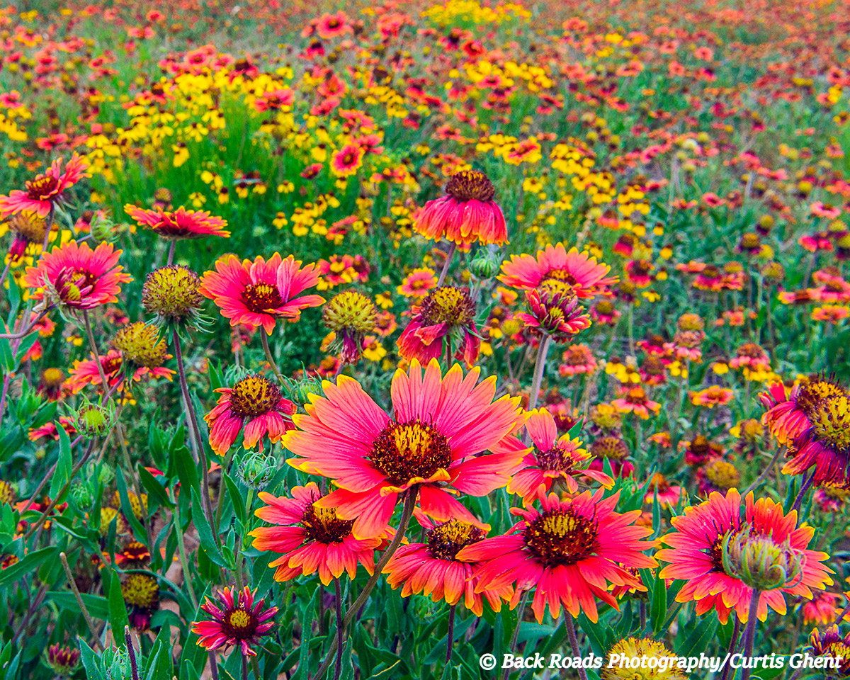 The hill country of Texas was alive with wild flowers.