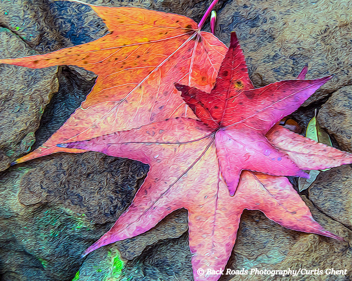 A afternoon walk along Turtle Creek in Dallas Texas yielded fallen maple leaves and with the help of photoshop I exaggerated...